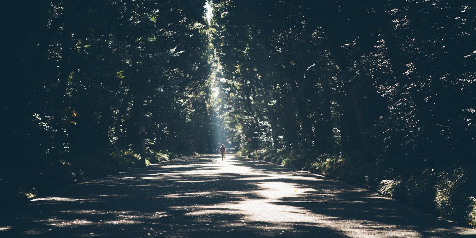 walking path trees